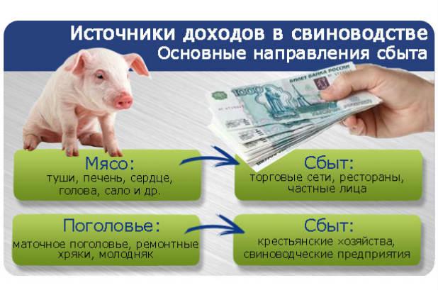 istochniki-dohodov-svinovodstva