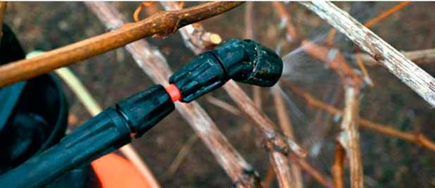 podgotovka-vinograda-k-zime